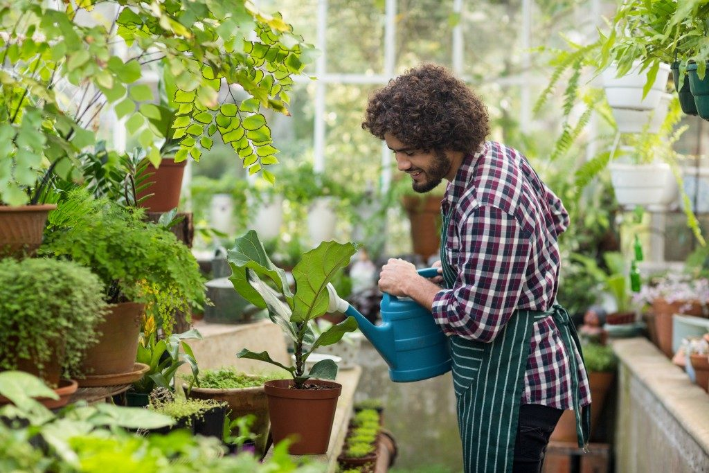 Man watering a plant while in the garden