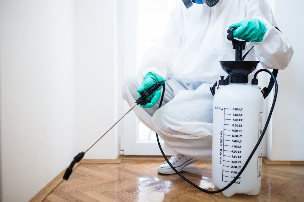 Spraying pesticide in the office