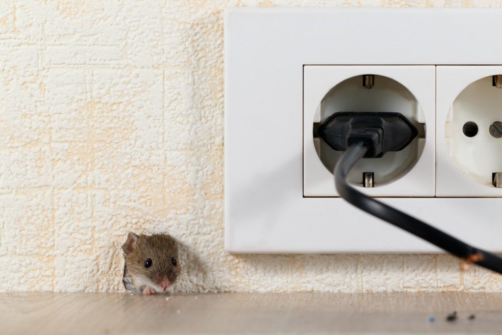 Mouse peeking near the socket